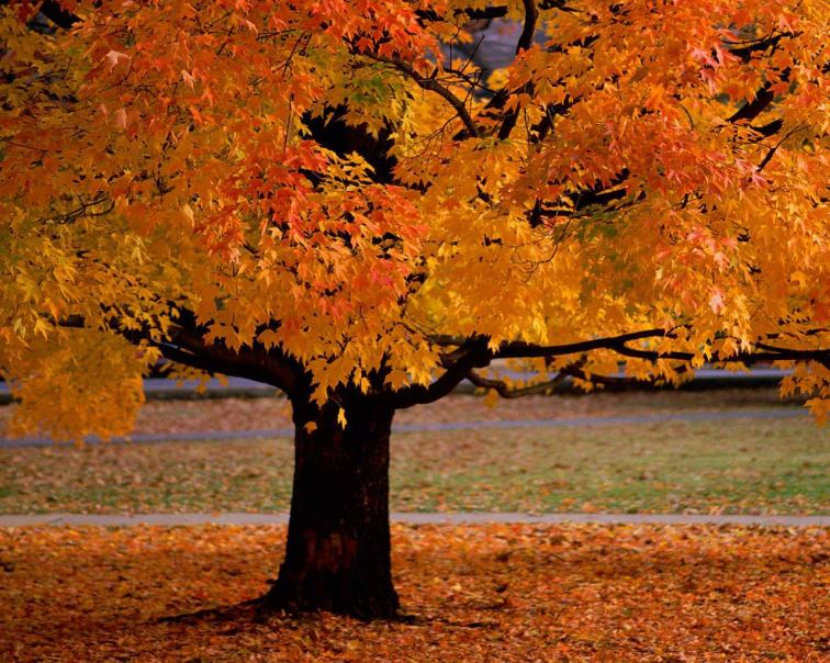 https://huyenthoaime.files.wordpress.com/2012/09/autumn_tree.jpg?w=300